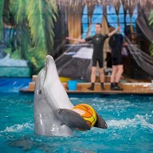 Дельфинарии, океанариумы Лосино-Петровского