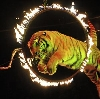 Цирки в Лосино-Петровском