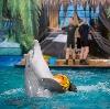 Дельфинарии, океанариумы в Лосино-Петровском